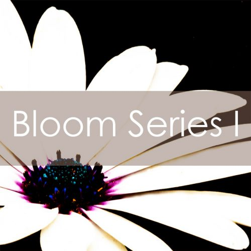 Bloom Series I