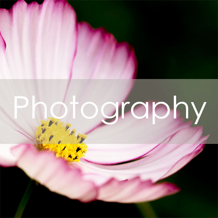 Current original photographic works available by Photographer Darren Pedley