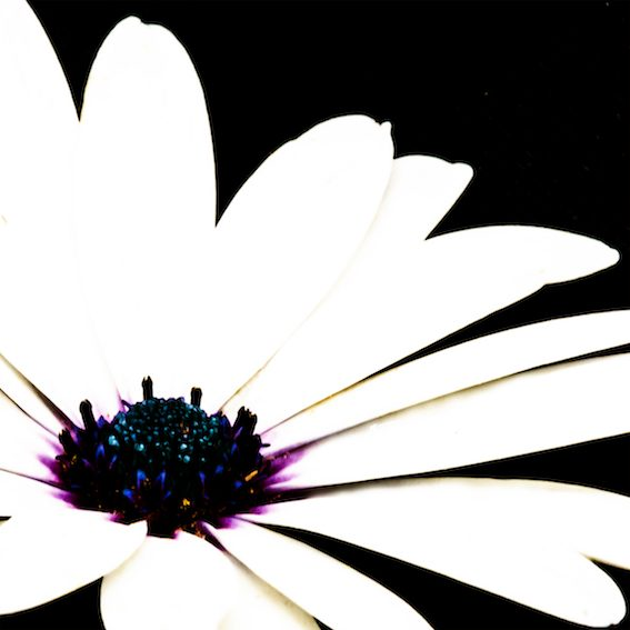 bloom, photograph by artist darren pedley, bobbie p gallery